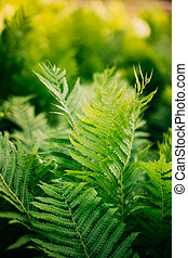 Natual green fern background. Summer season - Beautyful...