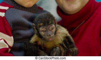 Little Monkey on Hands
