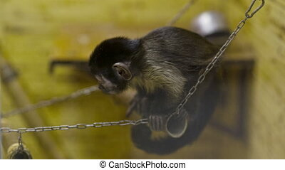 Little Monkey in the Zoo - Little monkey at cage in the zoo