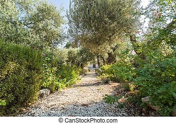 Gethsemane Garden on Mount of Olives, Jerusalem, Israel