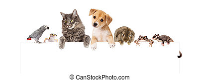Group of Domestic Pets Over White Banner - Row of domestic...
