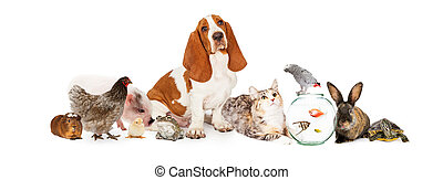 Group of Pets Together Over White - Large collection of...