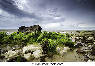 blurred and soft image of white and brown wet stone covered with green moss at the beach.