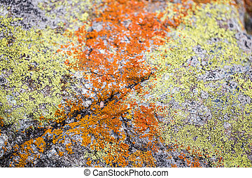 A Mix Crustose Linchen on a rock - Colorful mixture of...