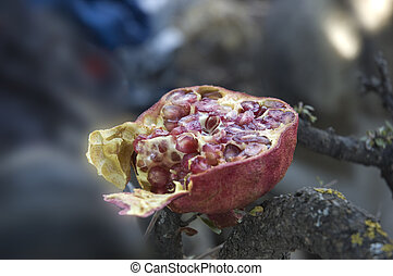 Pomegranate on a rock.