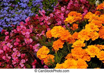 Flower Arrangement Background