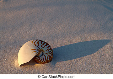 Nautilus Shell In Sand - Colorful Nautilus shell rests on a...