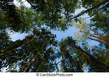 treetops in the rain forrest north sulawesi, indonesia -...