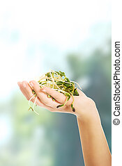 Photo of woman's hand holding a cuckooflower