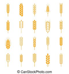 Set of simple wheat ears icons and design elements Vector...