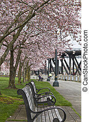 Park Bench at Spring Time - Enjoying spring time at...
