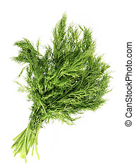Fennel leaf - Green fennel leaf isolated on white background