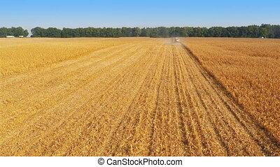 Harvesters Work on Cornfield