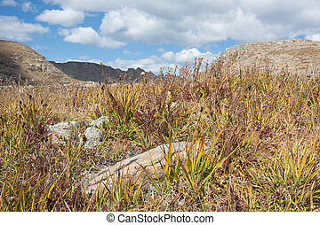 Dry Brush in Colorado Mountains - Dry brush and rocks in...