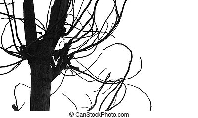Tree branches isolated on white - Silhouette of leafless...