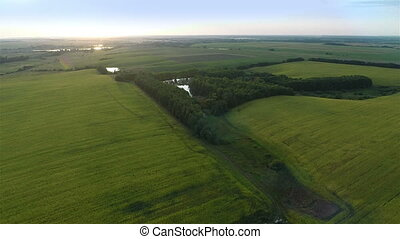 Flying Over Big Green Fields in Eve - Aerial shot: Flying...