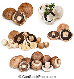 Mushrooms Collection isolated on White