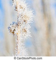 Winter Hoar Frost Macro - Macro of seed pods covered in hoar...