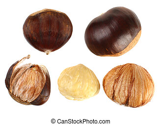 Chestnut set macro isolated on white background
