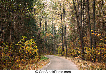 Winding road path walkway through autumn forest