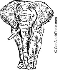 illustration vector hand drawn doodle african elephant isolated on white.