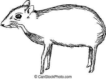 illustration vector hand drawn doodle the mouse deer or...