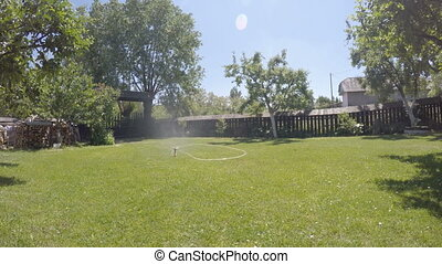 Water sprinkler working - Summer in the garden: water...