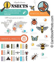 Insects infographic template Vector illustration