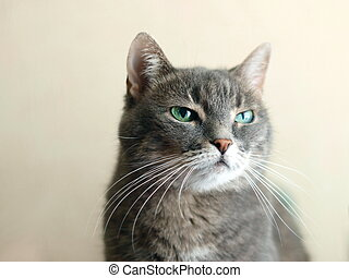 contempt emotion in cats eyes - scorn and contempt emotion...