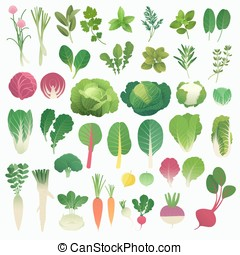 Vegetables and Herbs - Great clip art collection of...