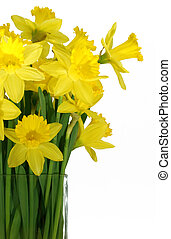 Daffodils in a square glass vase - Daffodils in a vase...