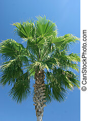 Palmtree - palmtree against a clear blue sky