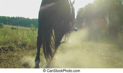 Back view of running horse on road