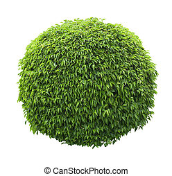 Ball shaped bush isolated on white