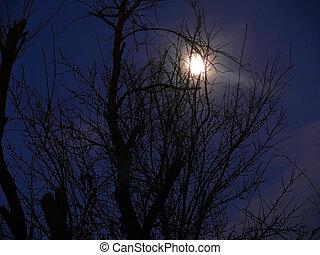 Dark night and full moon