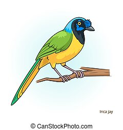 Inca jay bird educational game vector - Inca jay bird learn...