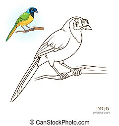 Inca jay bird coloring book vector - Inca jay bird learn...