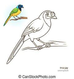 Inca jay bird coloring book vector - Inca jay bird learn...