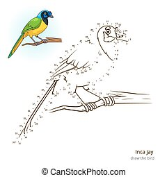 Inca jay bird learn to draw vector - Inca jay learn birds...
