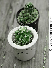 Cactus with prickle