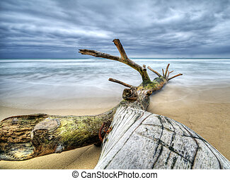 Beach - Timber on the beach with incoming storm - Dominican...