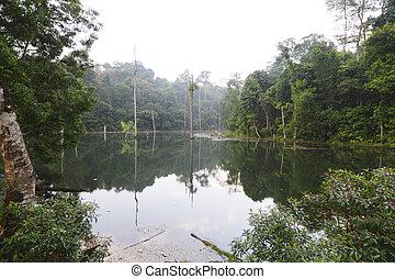Wetlands at Kota Damansara, Malaysia