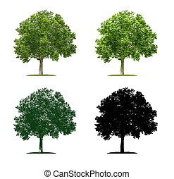 Tree in four different illustration techniques - Plane Tree