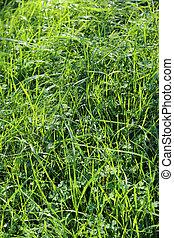 Closeup of summer grass and sunlight