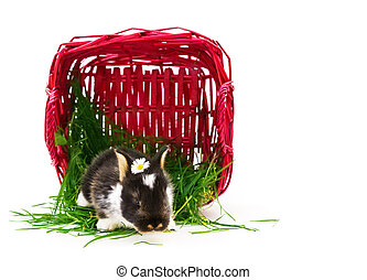 Easter bunny, basket, grass