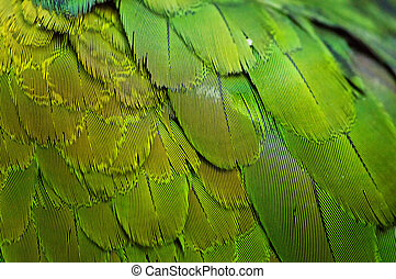 Plumage - Colorful Macaw Plumage background texture