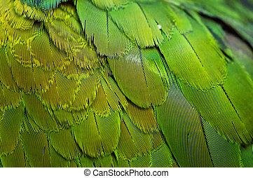 鳥類羽毛,