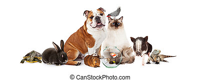 Collection of Domestic Pets Together - Row of popular...