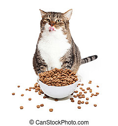 Fat Cat Eating Heaping Bowl of Food - Overweight adult cat...