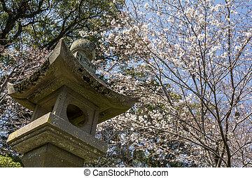 Stone lantern of shinto shrine under yoshino cherry blossoms